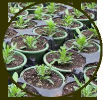 wholesaleplants